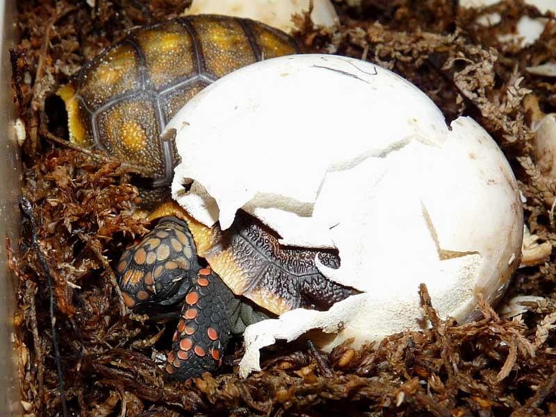Hatching day P1010286