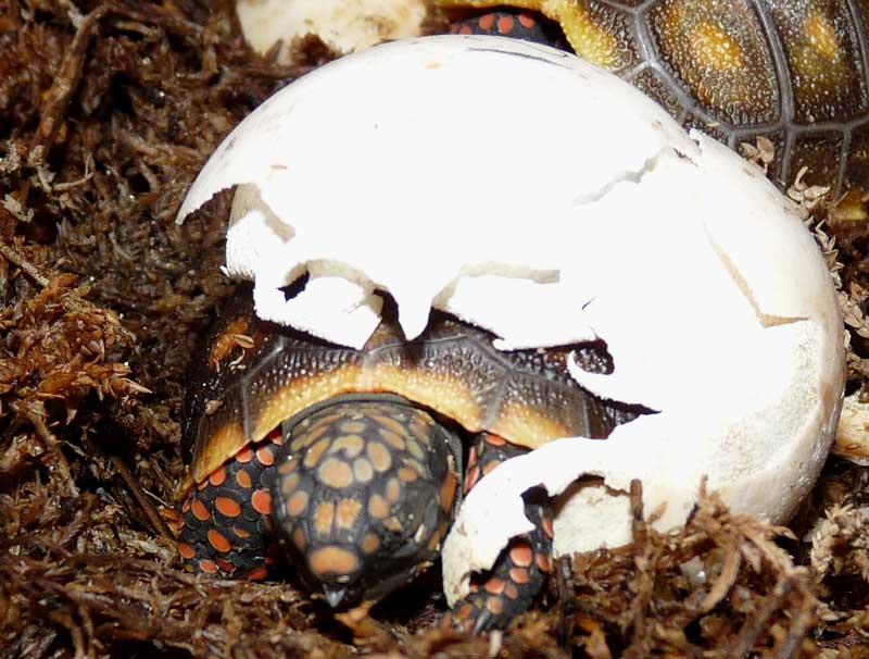 Hatching day P1010291